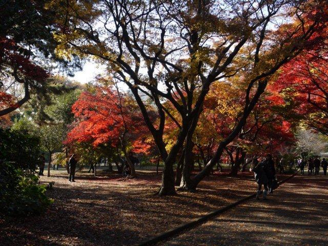 京都とはまた違う秋、新宿御苑の紅葉を見てきました_b0175688_15482198.jpg