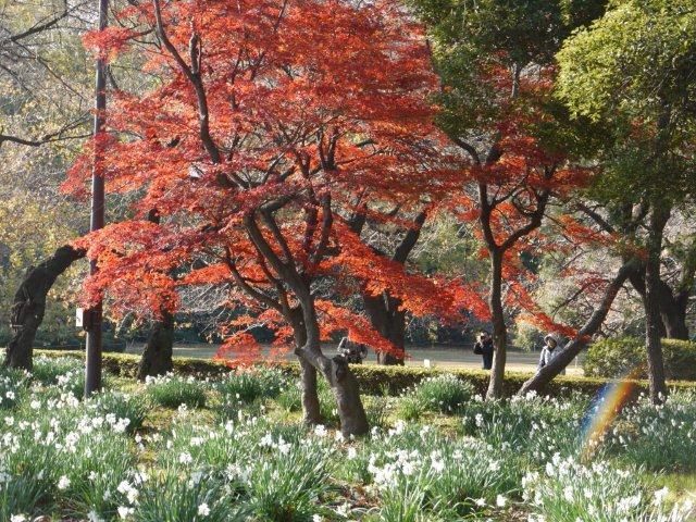 京都とはまた違う秋、新宿御苑の紅葉を見てきました_b0175688_1548585.jpg