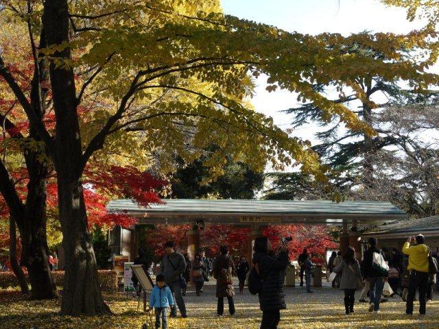 京都とはまた違う秋、新宿御苑の紅葉を見てきました_b0175688_15492490.jpg