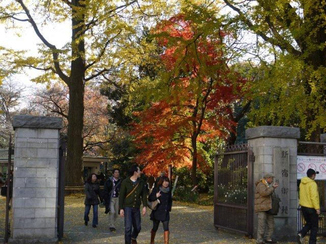 京都とはまた違う秋、新宿御苑の紅葉を見てきました_b0175688_15493786.jpg