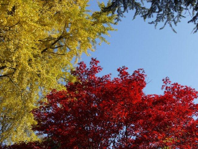 京都とはまた違う秋、新宿御苑の紅葉を見てきました_b0175688_8332186.jpg