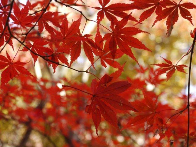 京都とはまた違う秋、新宿御苑の紅葉を見てきました_b0175688_8383974.jpg