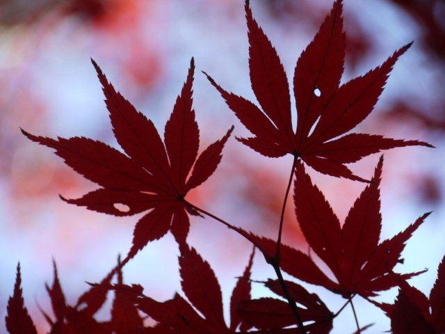 京都とはまた違う秋、新宿御苑の紅葉を見てきました_b0175688_8384918.jpg
