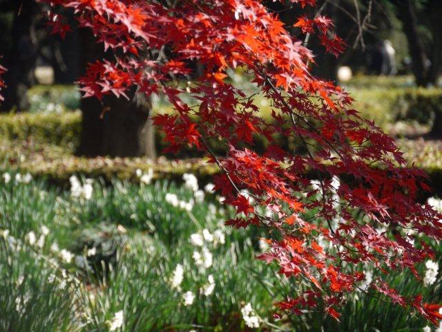 京都とはまた違う秋、新宿御苑の紅葉を見てきました_b0175688_8411661.jpg