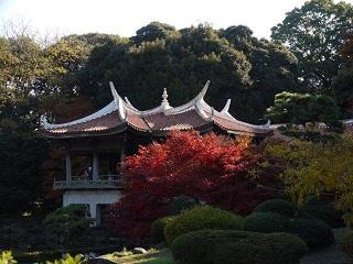 京都とはまた違う秋、新宿御苑の紅葉を見てきました_b0175688_846721.jpg
