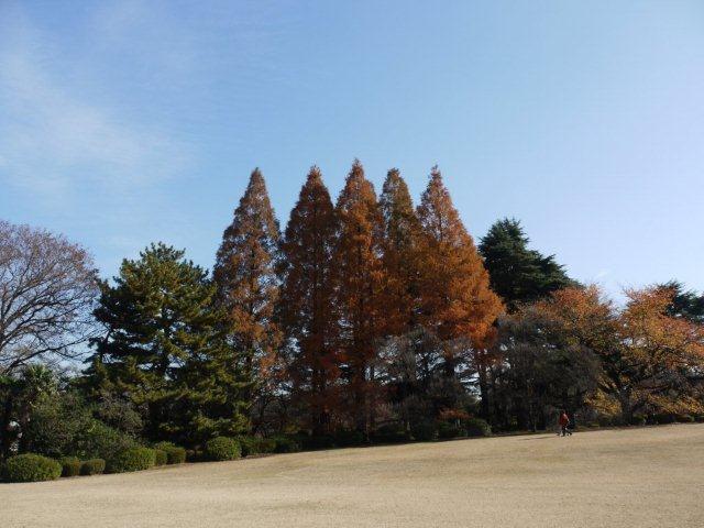 京都とはまた違う秋、新宿御苑の紅葉を見てきました_b0175688_8493147.jpg