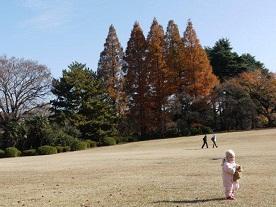 京都とはまた違う秋、新宿御苑の紅葉を見てきました_b0175688_850221.jpg