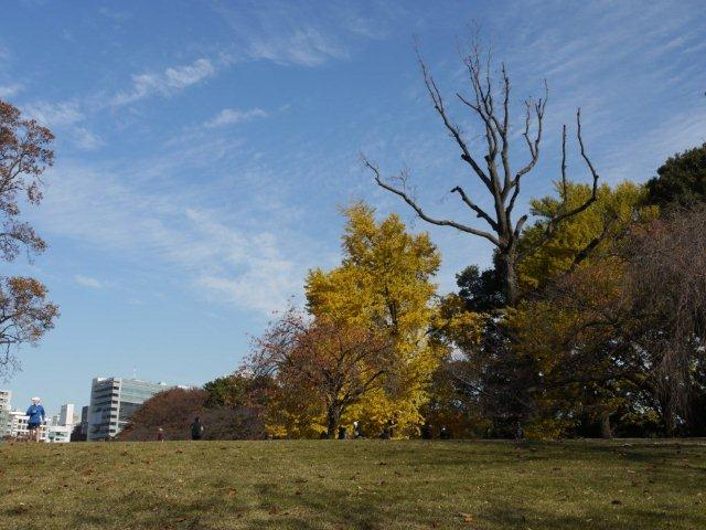 京都とはまた違う秋、新宿御苑の紅葉を見てきました_b0175688_9123255.jpg