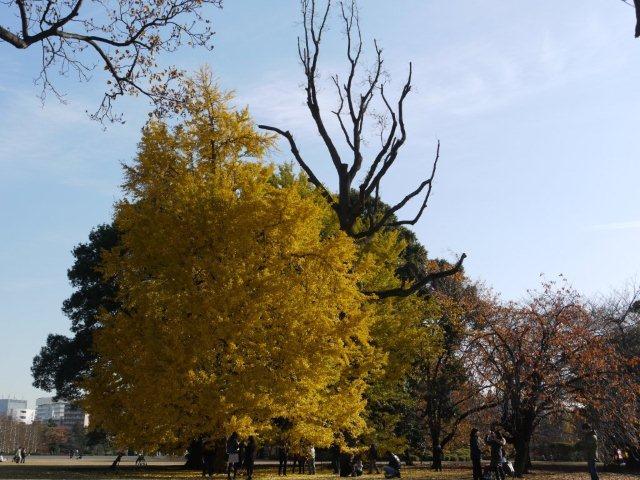 京都とはまた違う秋、新宿御苑の紅葉を見てきました_b0175688_912474.jpg