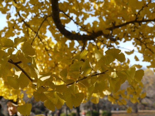 京都とはまた違う秋、新宿御苑の紅葉を見てきました_b0175688_91425100.jpg