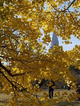 京都とはまた違う秋、新宿御苑の紅葉を見てきました_b0175688_9144073.jpg