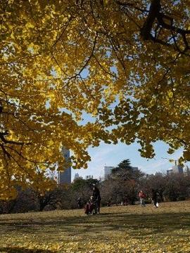 京都とはまた違う秋、新宿御苑の紅葉を見てきました_b0175688_9145230.jpg