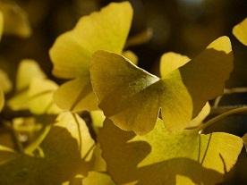 京都とはまた違う秋、新宿御苑の紅葉を見てきました_b0175688_9152373.jpg