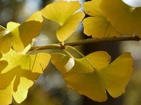 京都とはまた違う秋、新宿御苑の紅葉を見てきました_b0175688_9153436.jpg