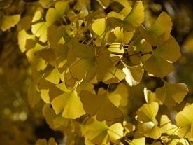 京都とはまた違う秋、新宿御苑の紅葉を見てきました_b0175688_9154897.jpg