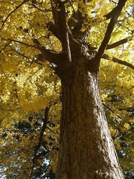 京都とはまた違う秋、新宿御苑の紅葉を見てきました_b0175688_9165841.jpg