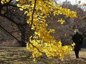 京都とはまた違う秋、新宿御苑の紅葉を見てきました_b0175688_9171612.jpg