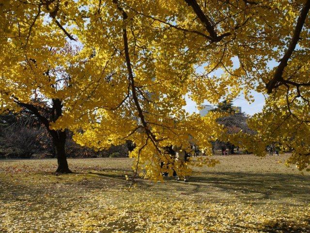 京都とはまた違う秋、新宿御苑の紅葉を見てきました_b0175688_9173565.jpg