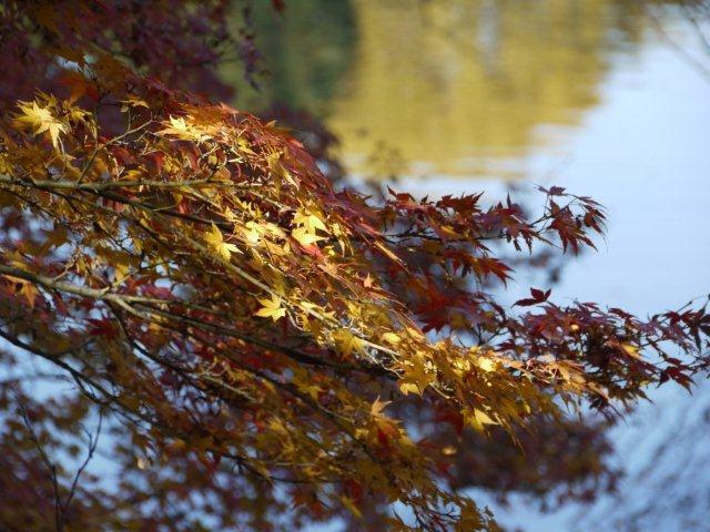 京都とはまた違う秋、新宿御苑の紅葉を見てきました_b0175688_981752.jpg