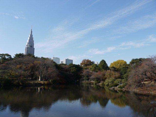 京都とはまた違う秋、新宿御苑の紅葉を見てきました_b0175688_983011.jpg
