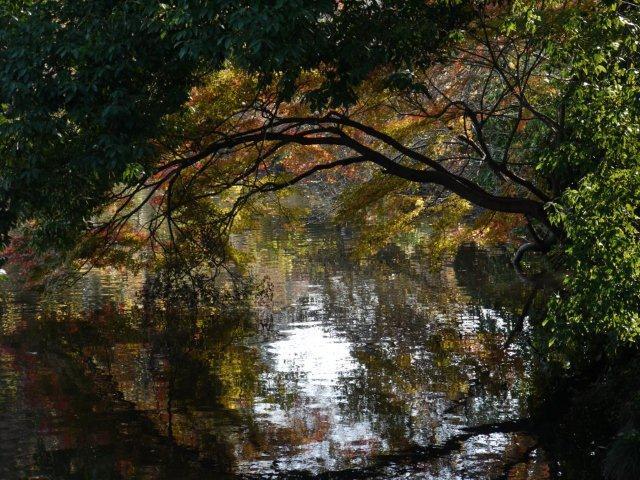 京都とはまた違う秋、新宿御苑の紅葉を見てきました_b0175688_98373.jpg