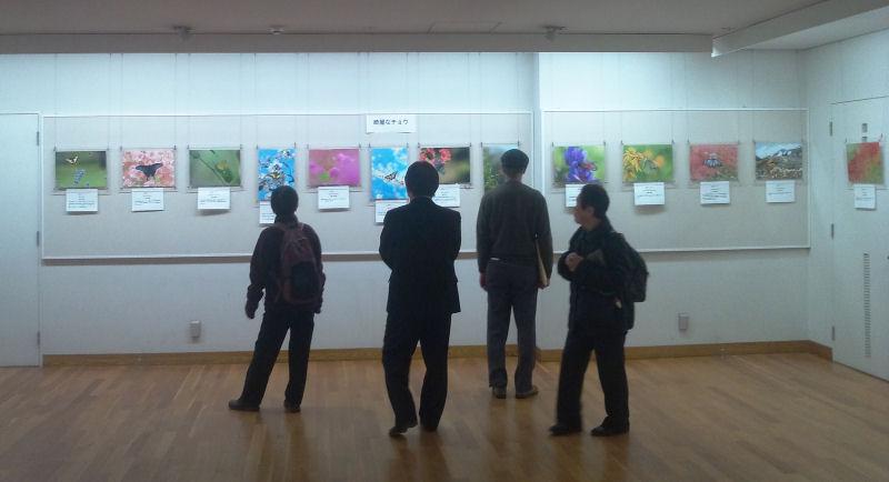 12月13日~18日 日本チョウ類保全協会主催「企画・写真展」のお知らせ_b0078795_1836942.jpg