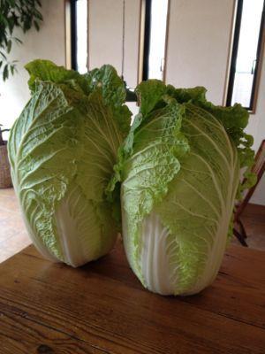 冬の野菜_c0188311_1428230.jpg