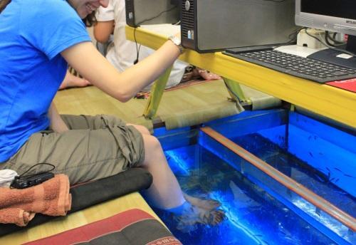 チェンマイで発見!「ドクターフィッシュ」で足をキレイにしてもらいながらネットができる奇妙なカフェ_b0064113_1852173.jpg