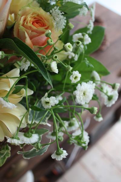 白い花_e0141819_2317199.jpg