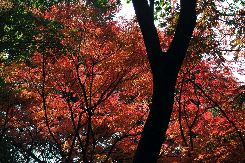 太宰府の紅葉2011_f0172619_1141552.jpg