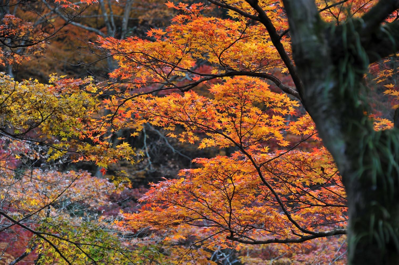 太宰府の紅葉2011_f0172619_185019.jpg