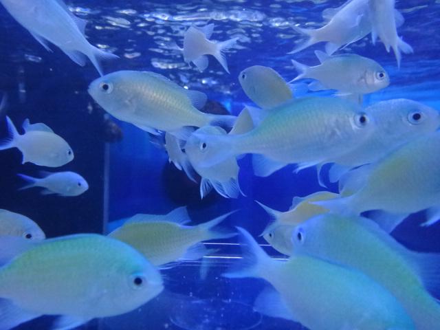 海水魚・サンゴ・水草・淡水魚_f0189122_12593891.jpg