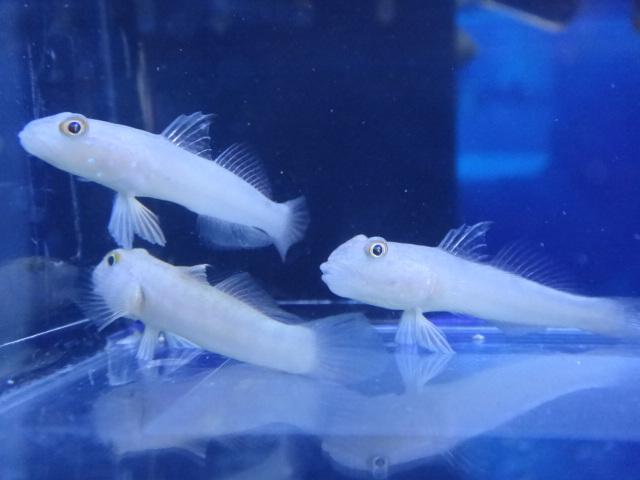 海水魚・サンゴ・水草・淡水魚_f0189122_1315391.jpg