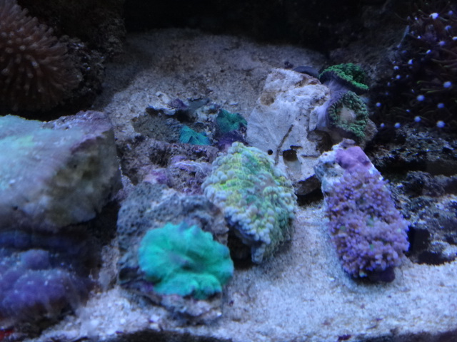 海水魚・サンゴ・水草・淡水魚_f0189122_1365177.jpg