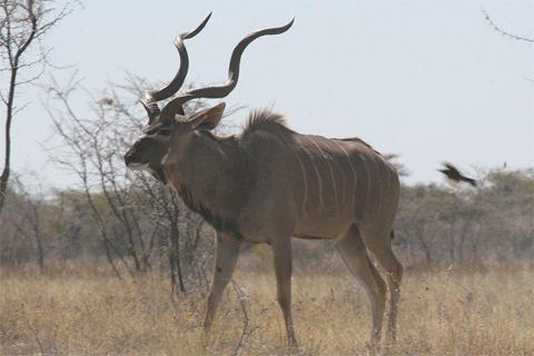 "SLOW \""kudu  3 hold wallet\"" ご紹介_f0191324_11453536.jpg"