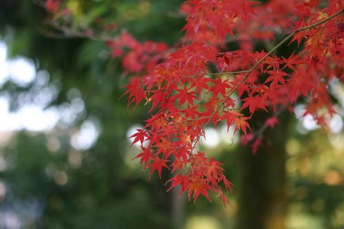 京都の紅葉_c0134734_1916282.jpg