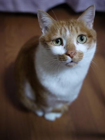猫のお友だち ちゃーくんちょびくんペコちゃん編。_a0143140_0444841.jpg
