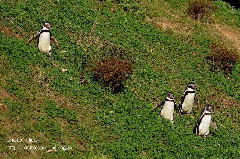 ペンギンヒルズ_b0024758_1452872.jpg