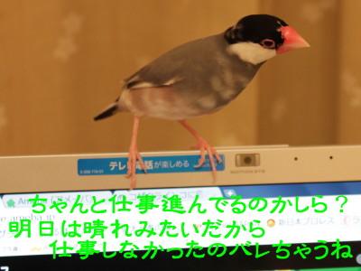 b0158061_22363271.jpg