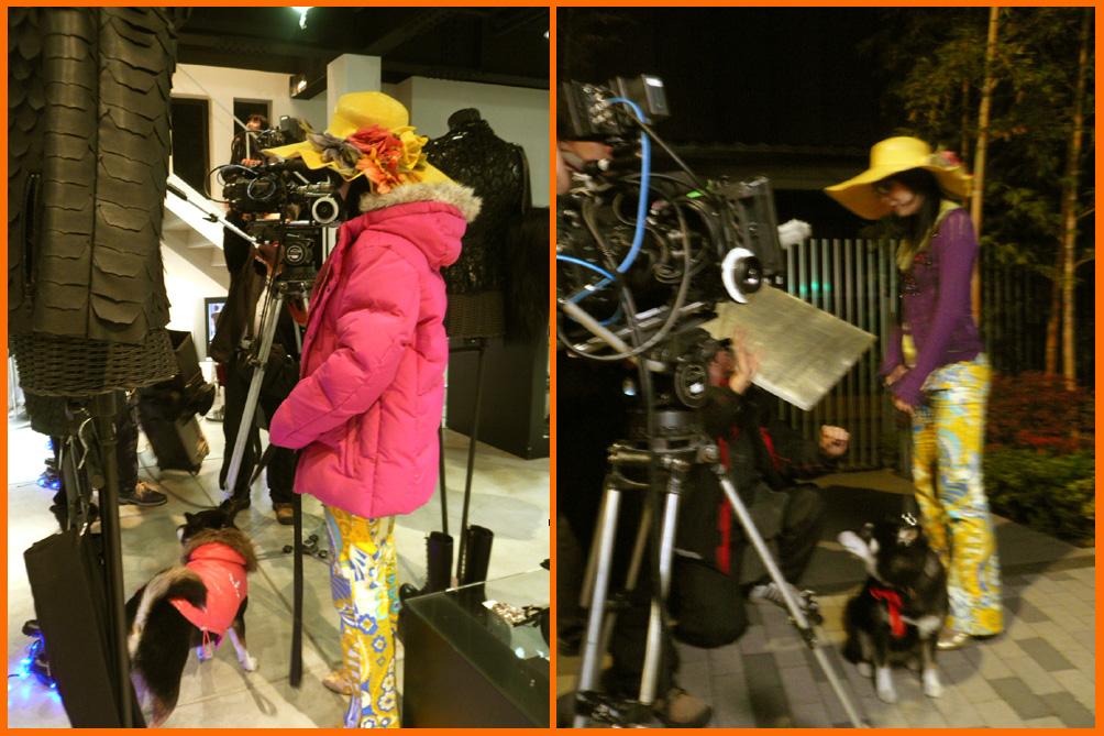 表参道イルミネーション散歩。ぼたんちゃんと静香ちゃん映画出演。_e0236072_20976.jpg