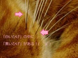 b0200310_1544266.jpg