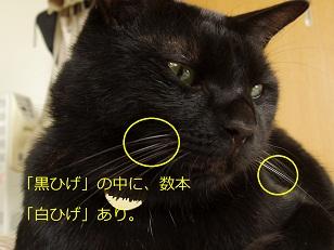 b0200310_15481211.jpg
