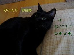 b0200310_15555993.jpg