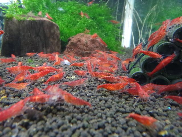 熱帯魚・水草_f0189122_1312236.jpg