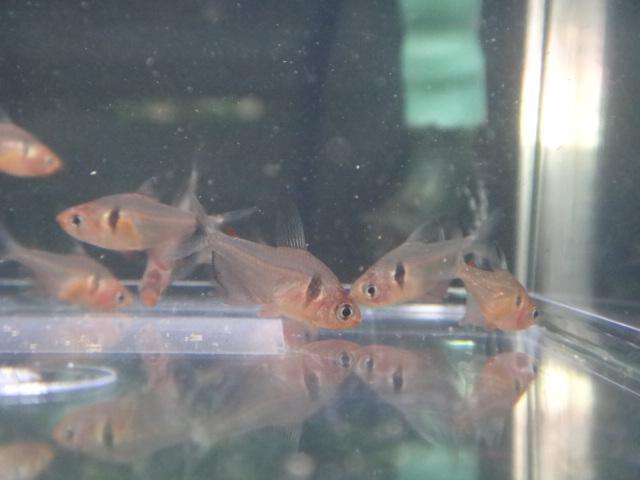 熱帯魚・水草_f0189122_133139.jpg
