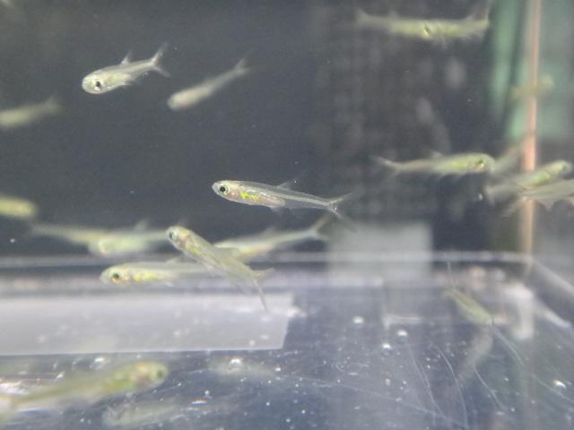 熱帯魚・水草_f0189122_1355039.jpg