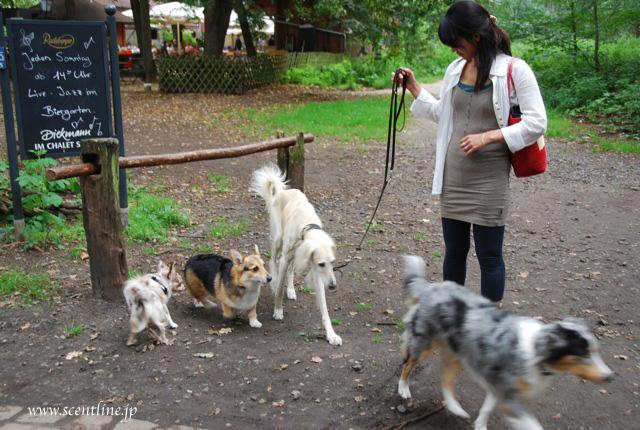 京子アルシャー「動物福祉&犬学」セミナー開催のお知らせ_c0099133_13454065.jpg