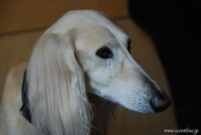 京子アルシャー「動物福祉&犬学」セミナー開催のお知らせ_c0099133_13521997.jpg