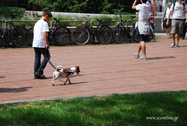 京子アルシャー「動物福祉&犬学」セミナー開催のお知らせ_c0099133_17223385.jpg