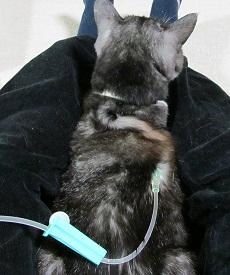 猫の強制給仕(アシストごはん)_d0085254_2219189.jpg